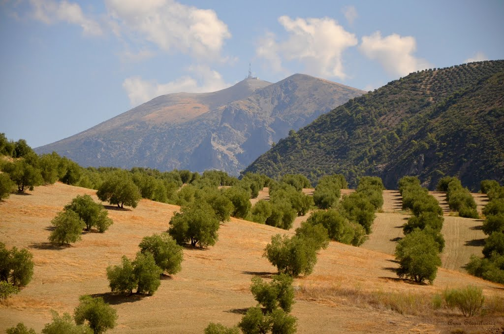 Andalusia-olive-trees-Испания-Андалузия