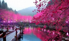 Cherry-Blossom-Lake-Sakura-Japan