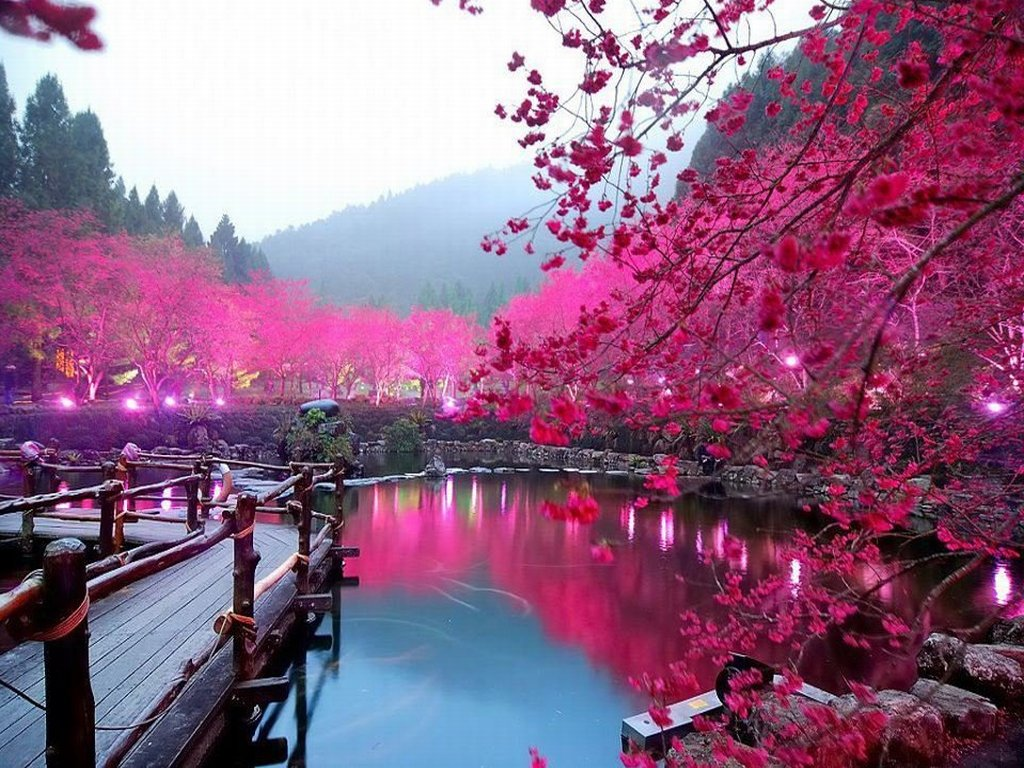 http://www.fotosselect.ru/wp-content/uploads/2015/04/Cherry-Blossom-Lake-Sakura-Japan.jpg