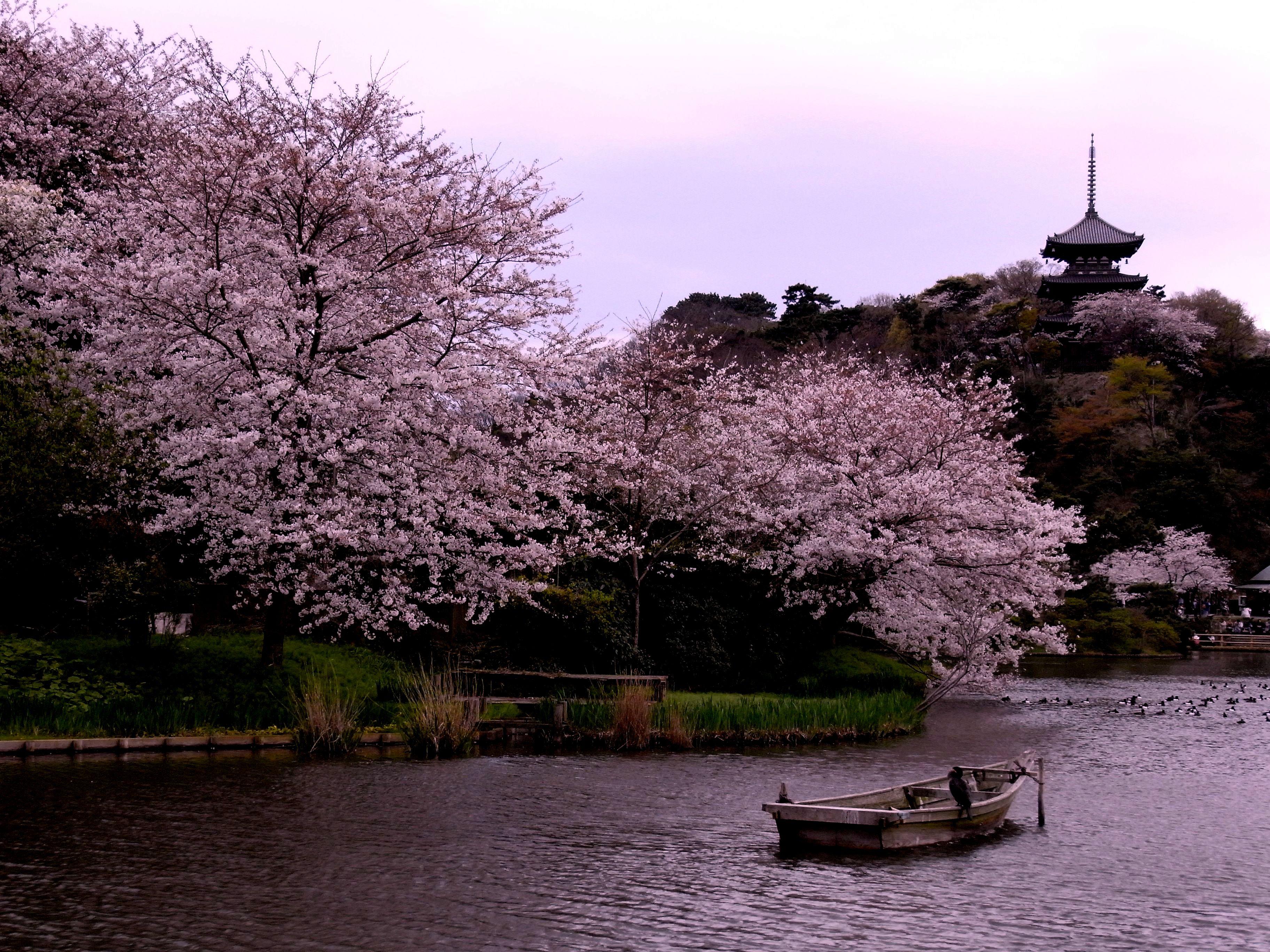 Sankeien Garden, Йокохама. Япония, санкейен сад