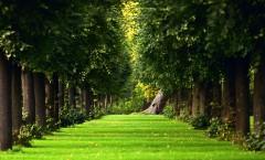Зеленая тропа среди деревьев