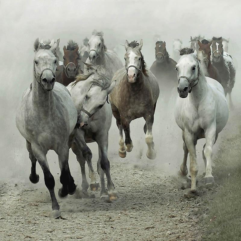 Лошади скачут