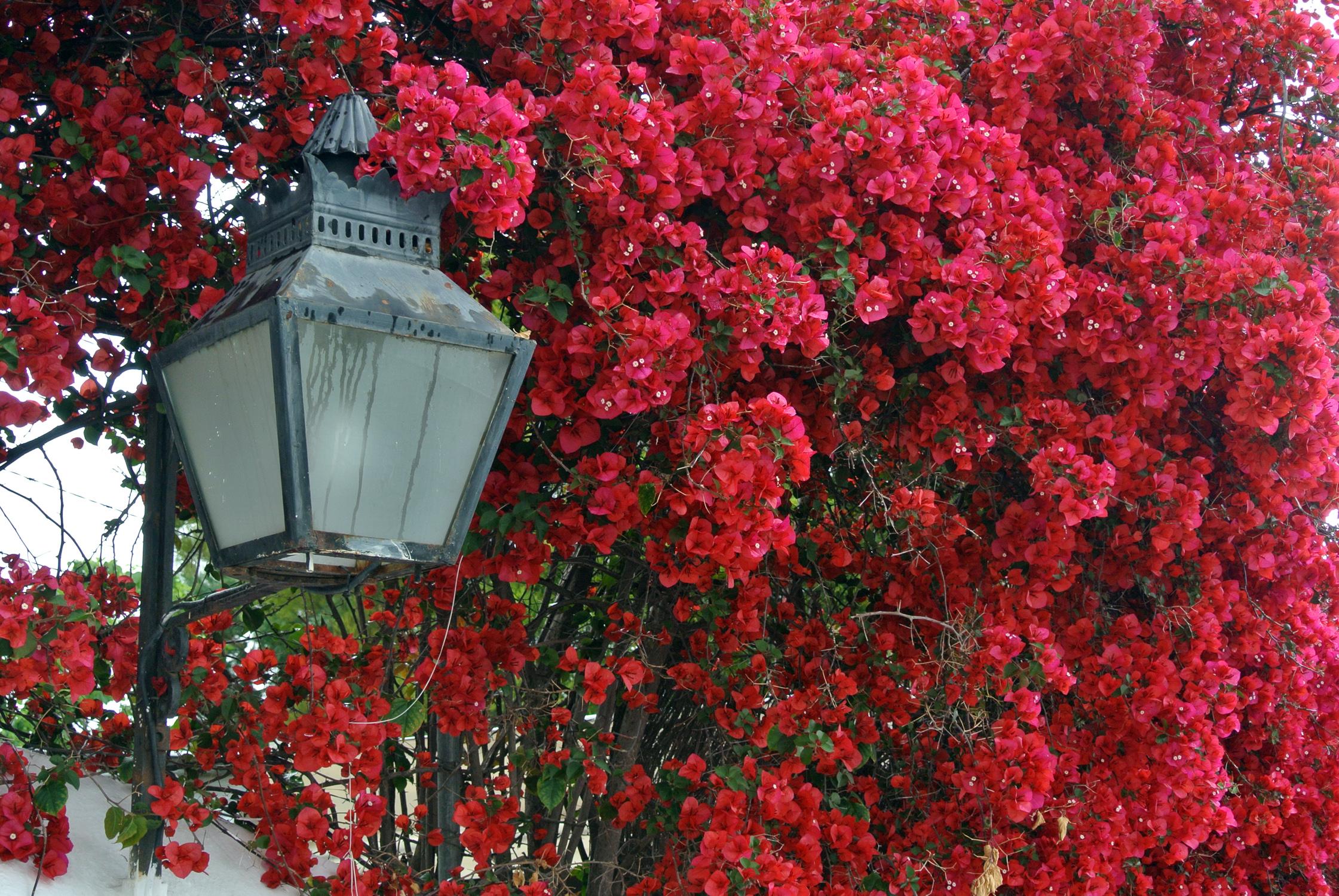 cordoba-cveti-v-gorode-andalusia-ispanija