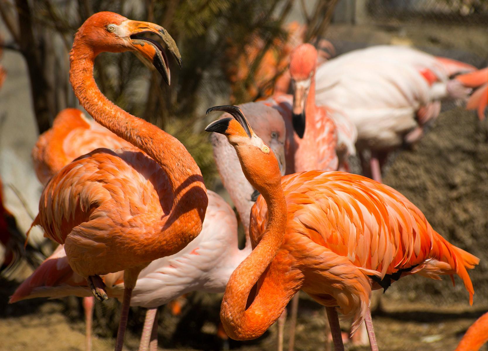 flamingo-moscowskiy-zoopark