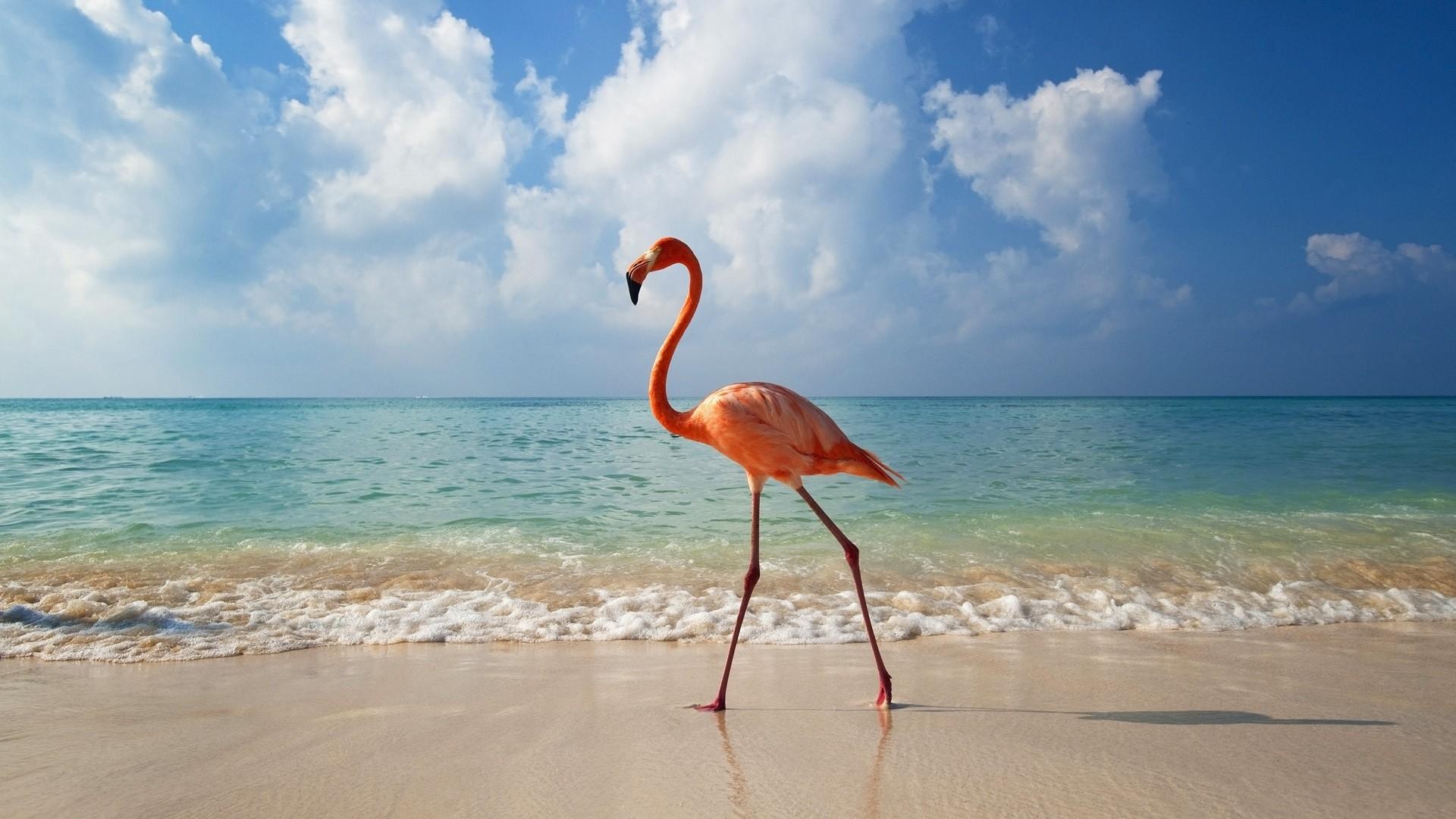 flamingo_u_moria