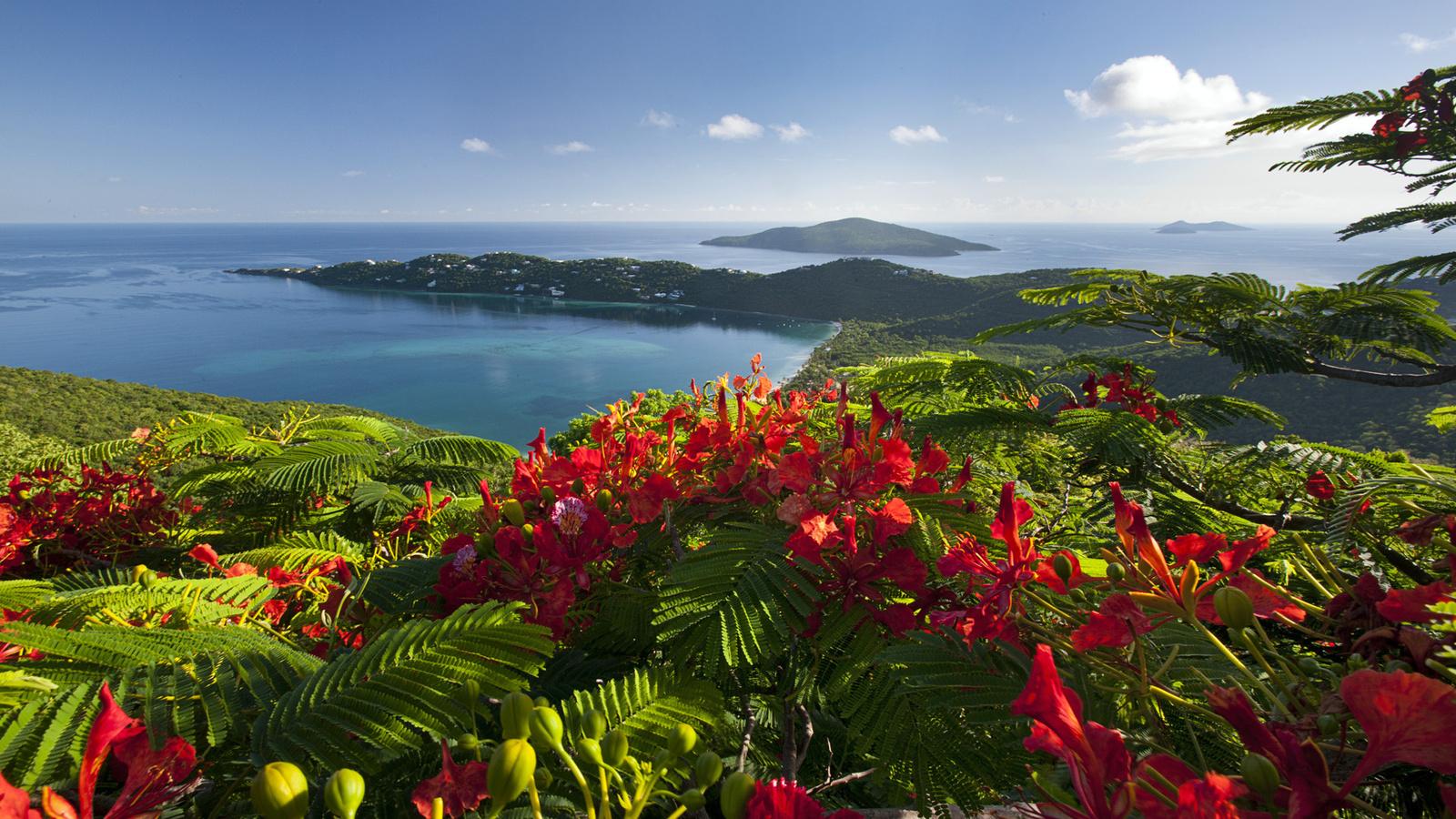 island-cveti