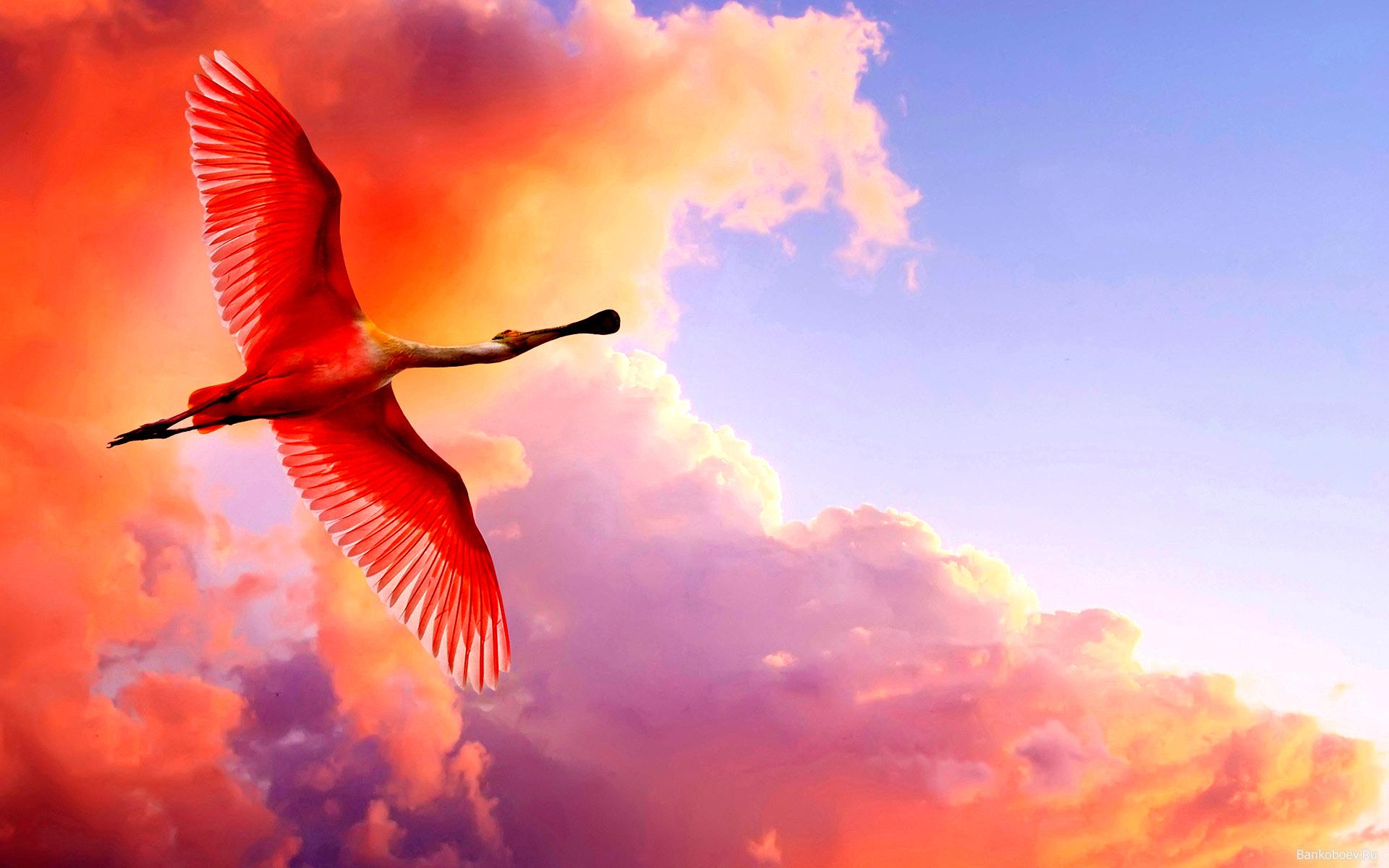 v_polete_rozovyi_flamingo