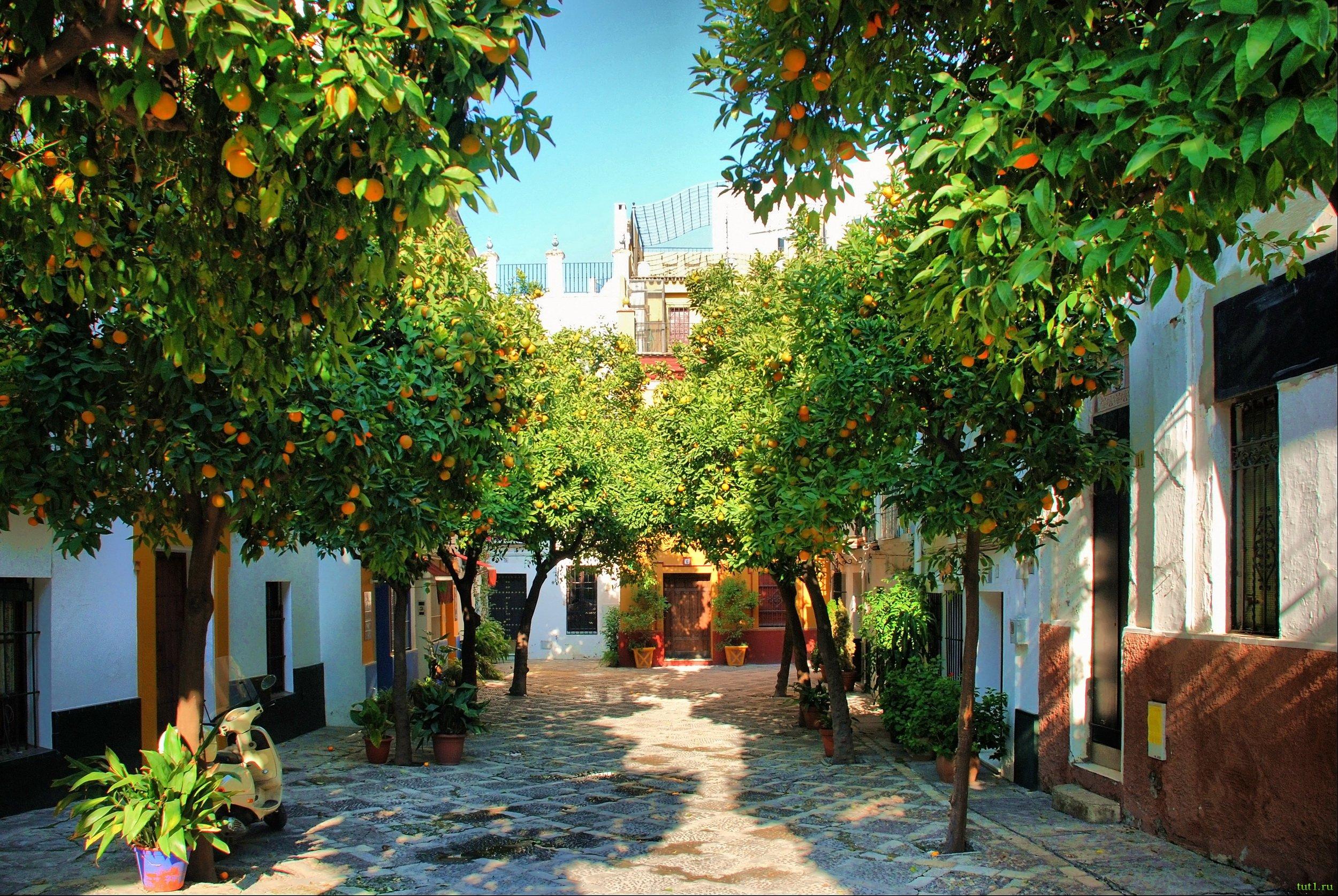 Севилья_Андалусия_Испания_деревья-апельсин