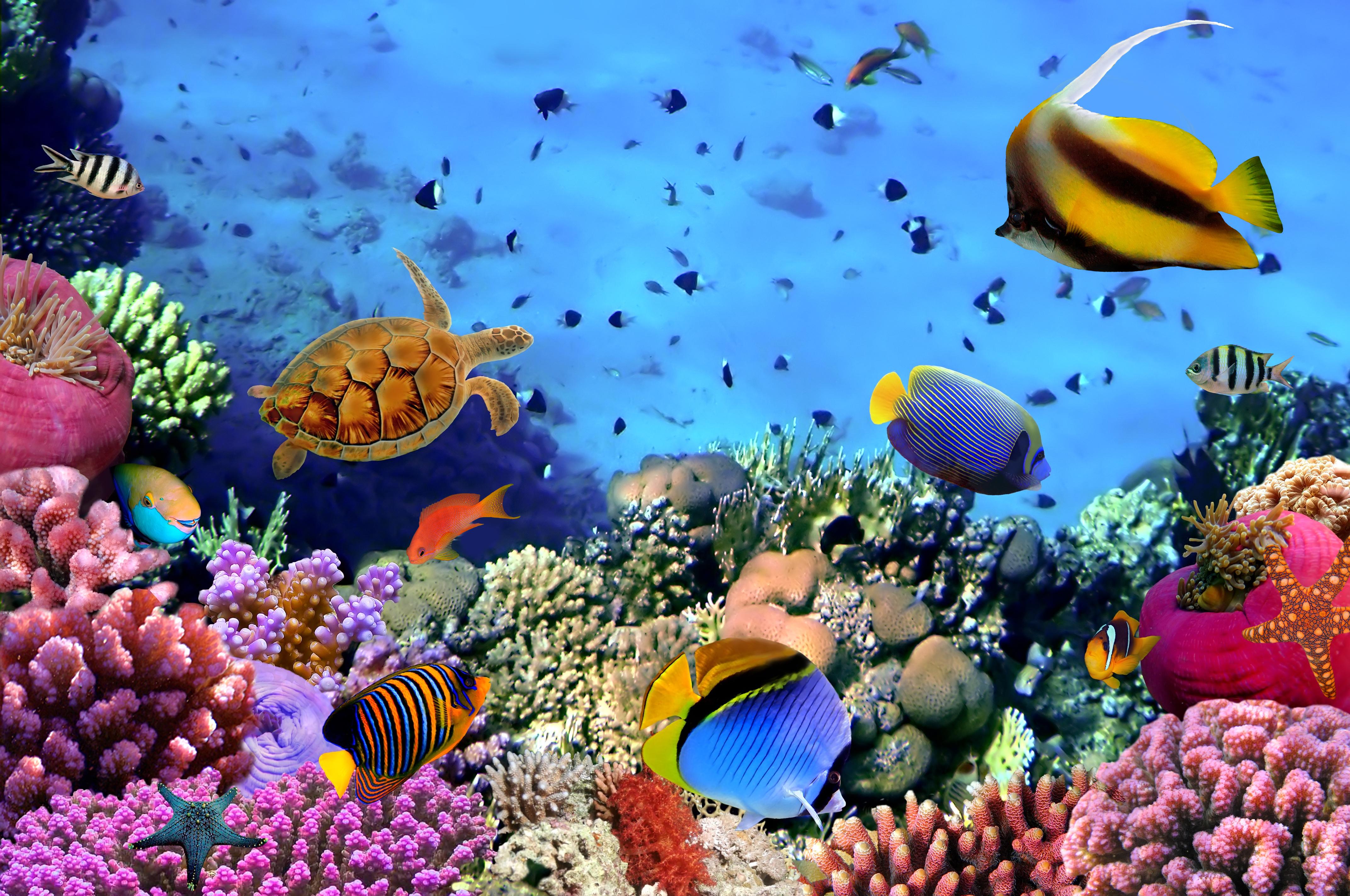 подводный-мир-красного-моря