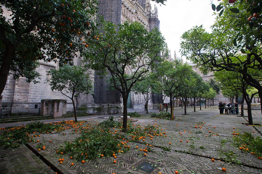 apelsini-na-zemle-sevilia-spain-andalusia