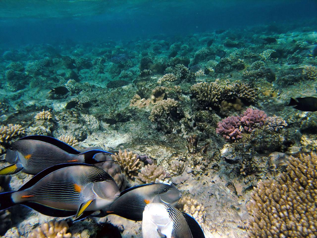 krasnoe-more-podvodniy-mir
