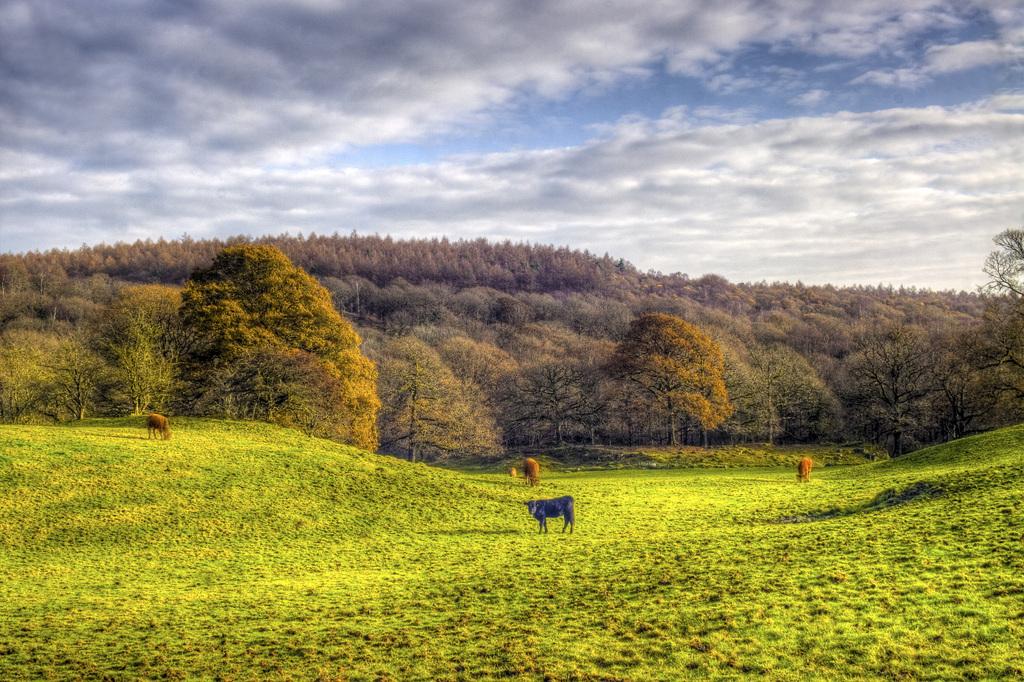Зеленый луг с пасущимися животными