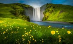 blooming-flowers-Skogafoss-Waterfall-iceland