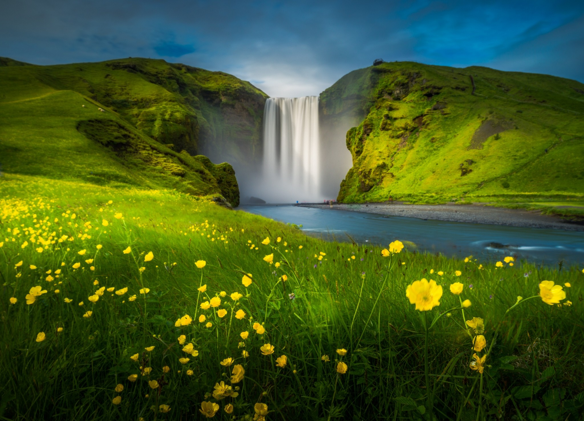 blooming-flowers-Skogafoss-Waterfall-iceland