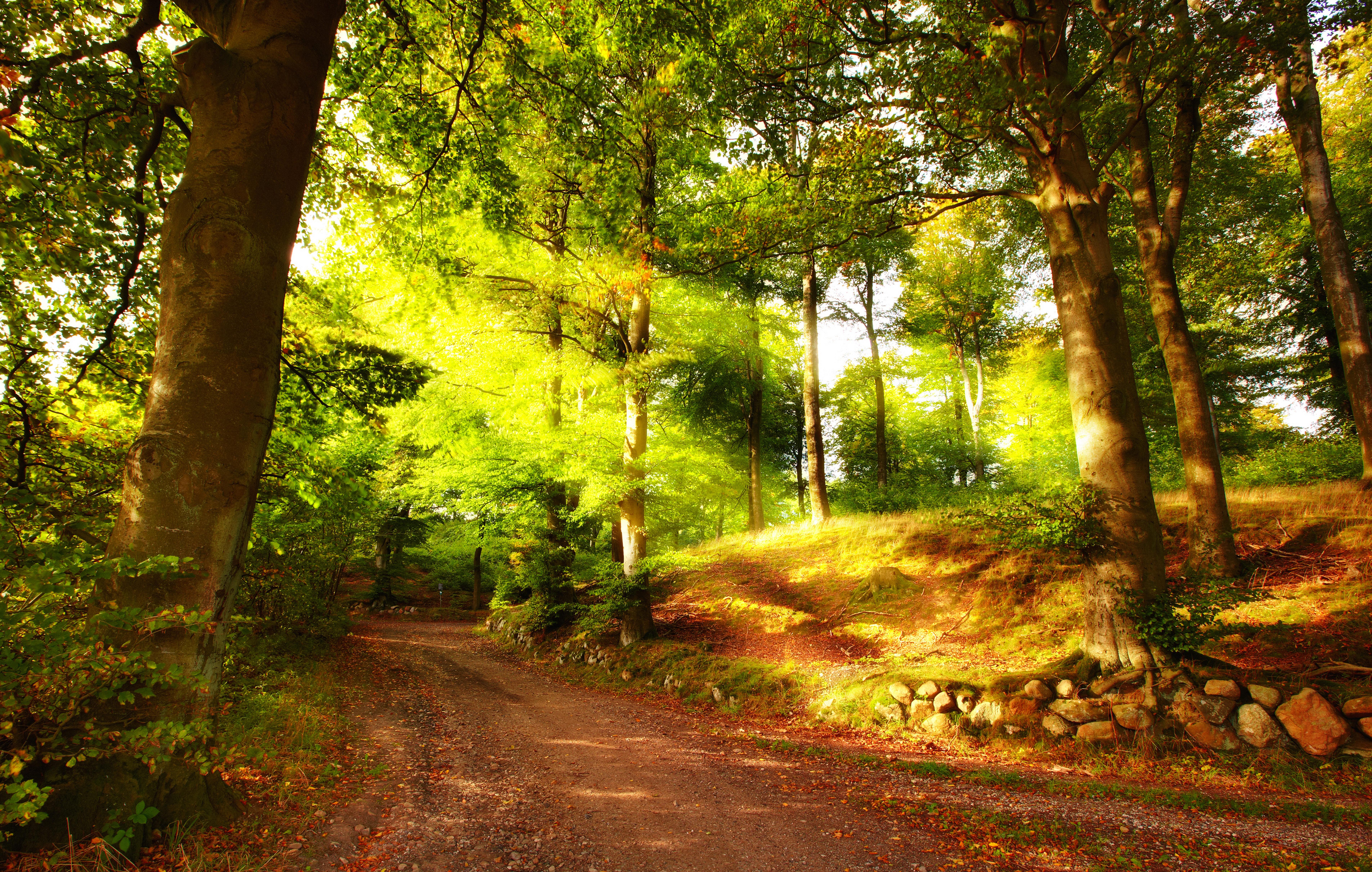 лес_летом_в_солнечных_лучах