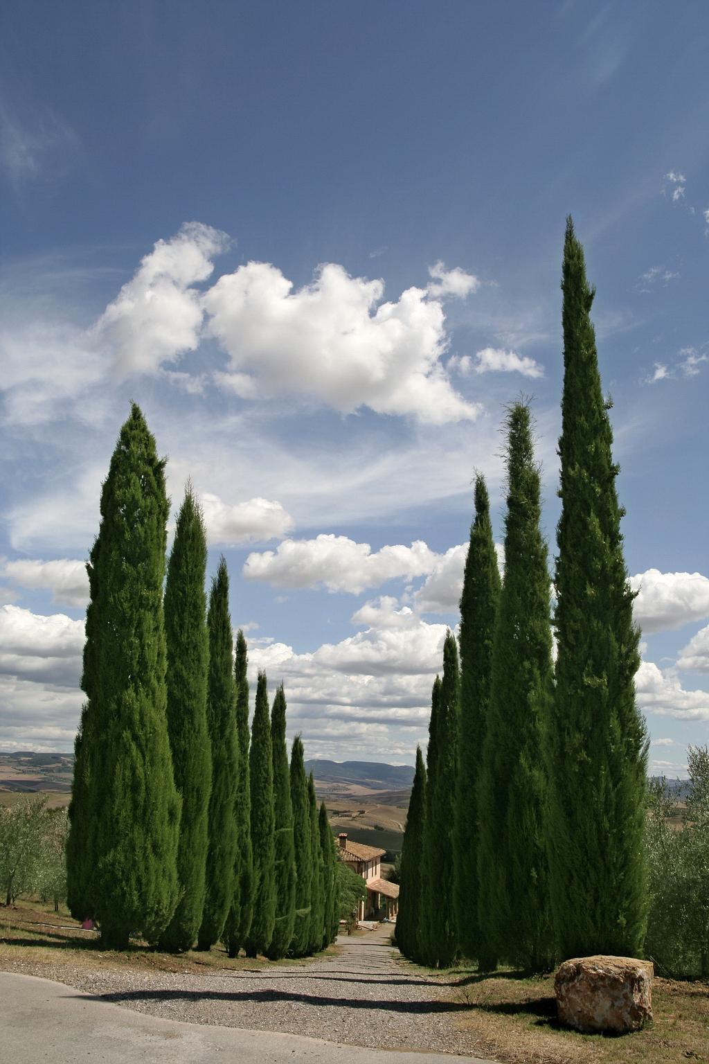 Val-d'Orcia-Tuscany-Italy