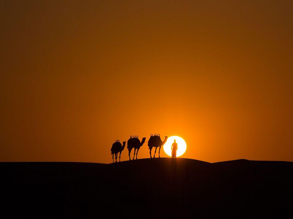 camel-caravan-sunset-desert