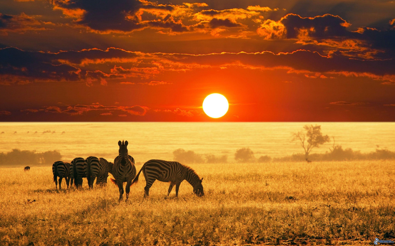 зебры-в-саванне