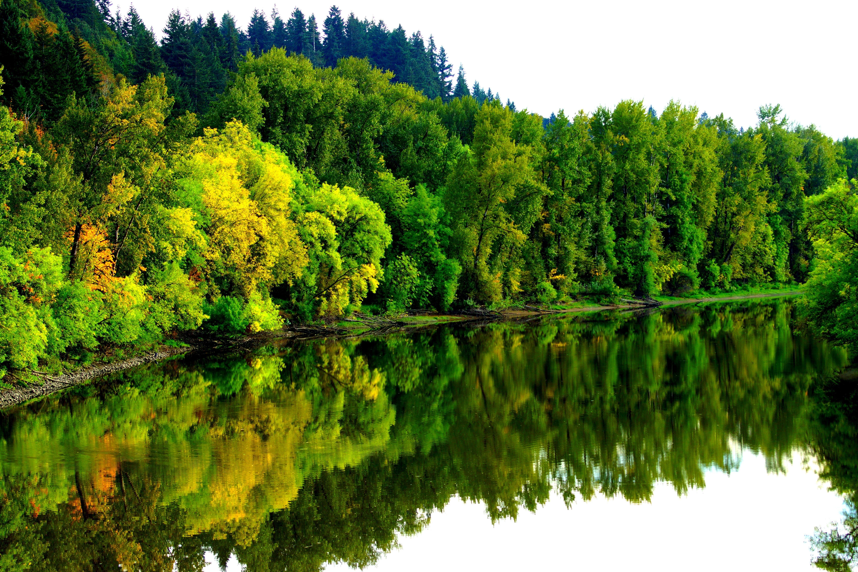 Лес_у_озера_водоем_в_лесу