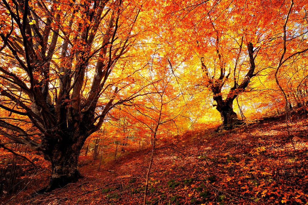Осенний_лес_красивая_природа_лес