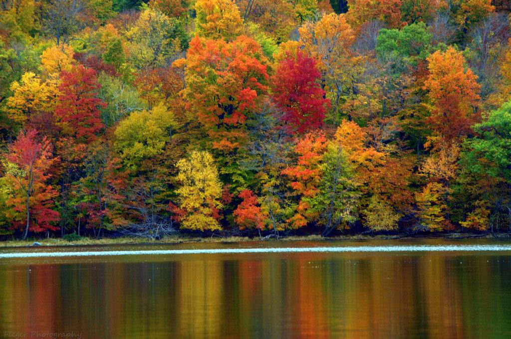 Осень_в_цвете_осенний_лес_деревья_красивые