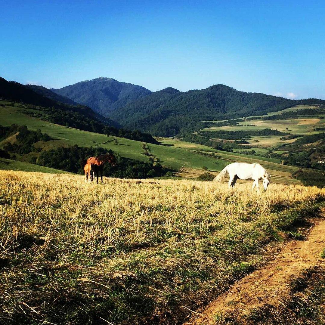 Иджеван_Армения_красивая_природа_лошади_пасутся_горы