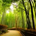 Sagano.Bamboo.Forest.original.kioto.japan