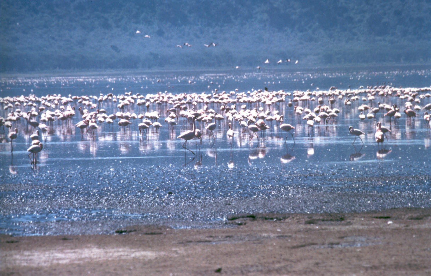 Lake_Nakuru_flamingos