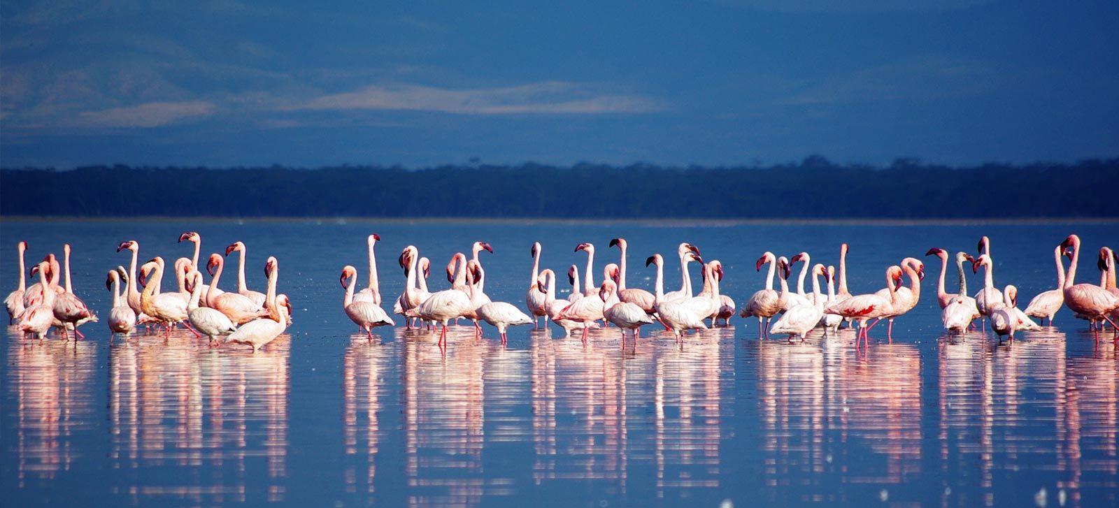 nakuru_lake_kenija_afrika