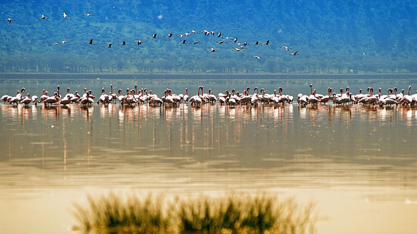 nakuru_lake_magic_nature